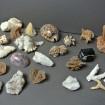 Collection de coquillages & pierres dures