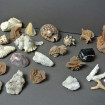 Collection of shells & hard stones